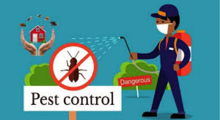 Things to keep in mind before going for pest control