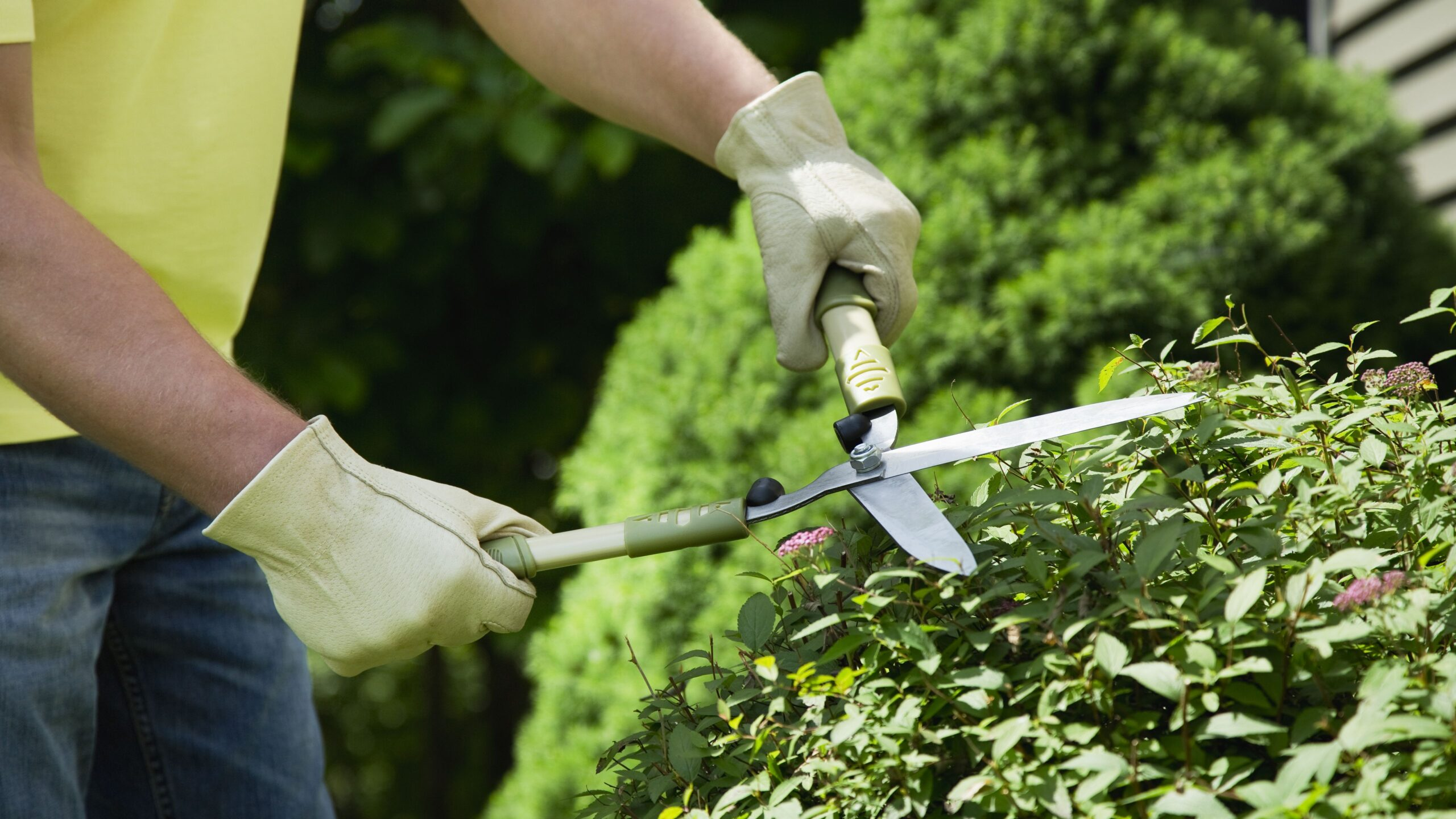 The Top 5 Landscape Maintenance Mistakes to Avoid